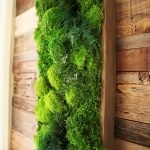 Best Indoor Plants for Tropical Home Decoration Part 15