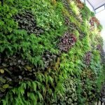 Best Indoor Plants for Tropical Home Decoration Part 22