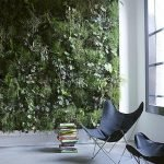 Best Indoor Plants for Tropical Home Decoration Part 25