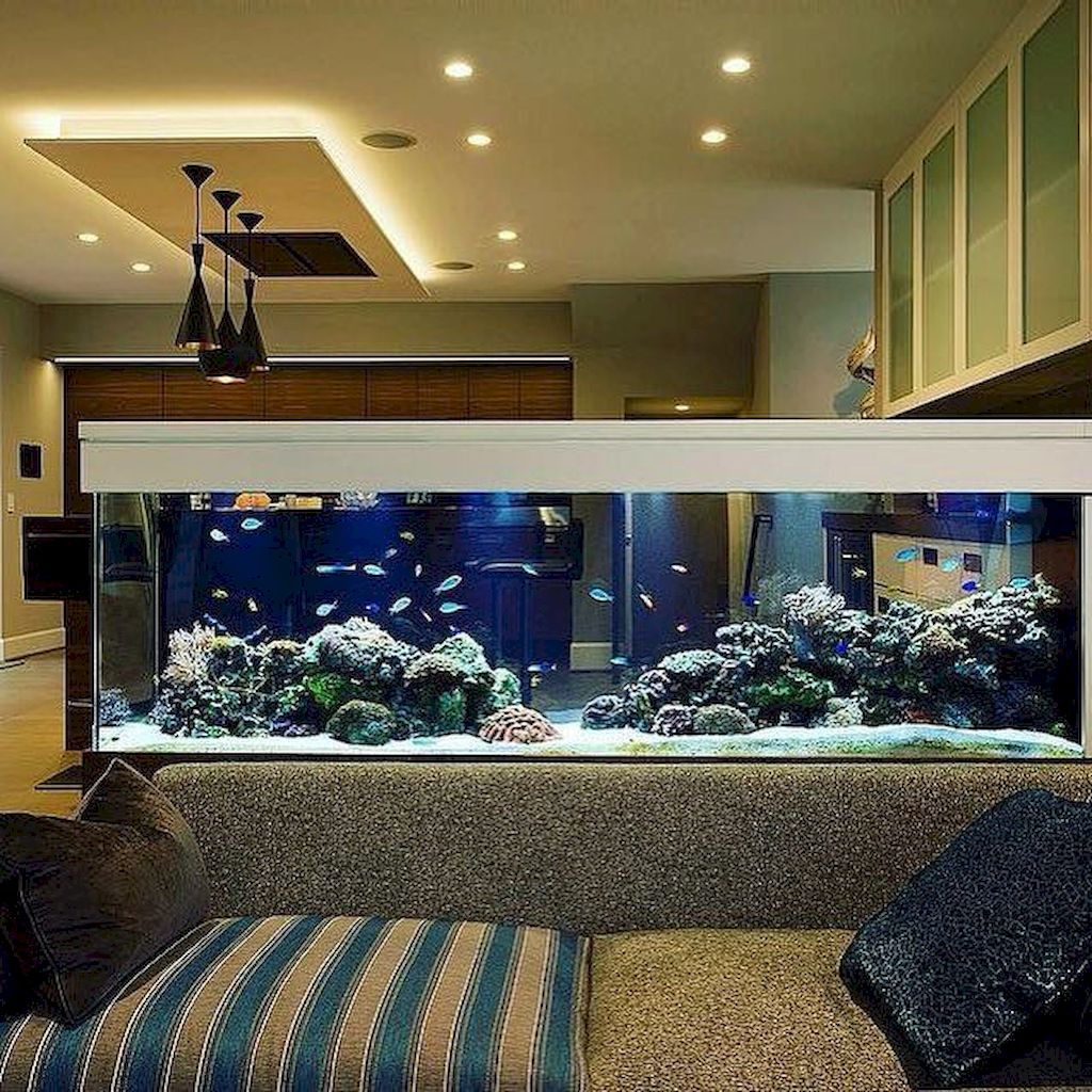 Creative Wall Auarium designs For Home Decoration and Amazing Room Separator Part 24