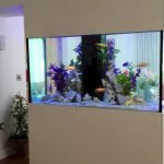 Creative Wall Auarium designs For Home Decoration and Amazing Room Separator Part 5