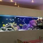 Exotic Wall Mounted Aquarium Giving Better Mood Everyday Part 43