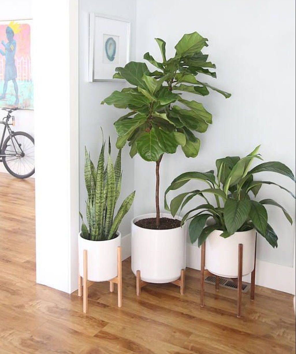 Plants Inside Rooms: Best Living Room Greenery Decoration